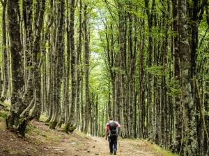 Camino Francés (Camino de Santiago)