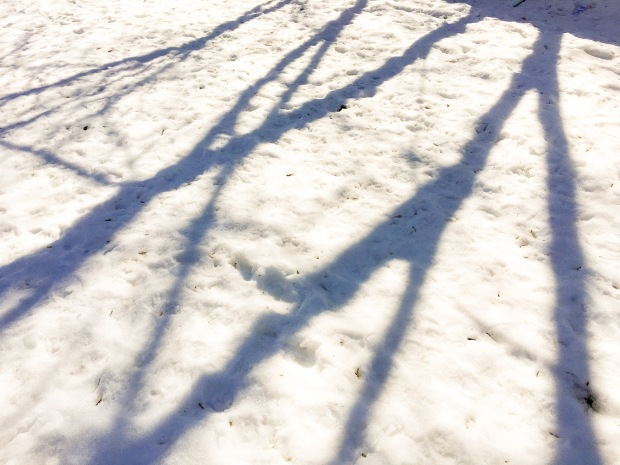 Walk west for two blocks and find an interesting shadow and take a picture of it. Found at Wolseley Ave.