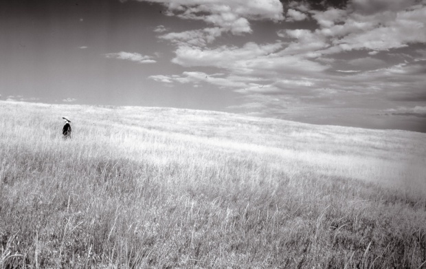 Detail, In Prairie Grasses, South Dakota (from the series In A Circle Of Light)