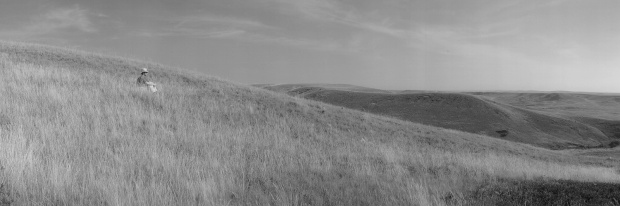 Detail. Alone with an Endless View, Grasslands National Park, Saskatchewan (from the series Grasslands)