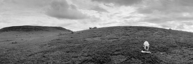 Detail. Life and Death Under a Restless Sky, Grasslands National Park, Saskatchewan (from the series Grasslands)