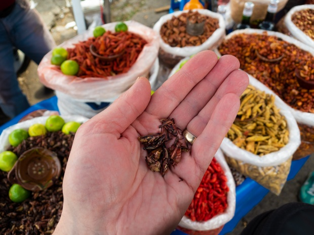 Tasty chapulines (grasshoppers) finished with lime and salt.
