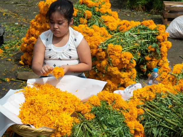 Marigold petals to spread on an ofrenda